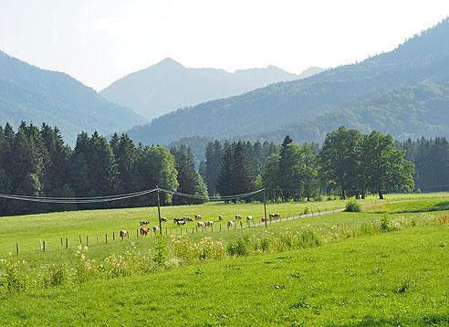 Radfahren auf dem Rheintalradweg: Singletrail führt weiter