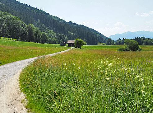 Der Schotterweg durchquert das Naturschutzgebiet